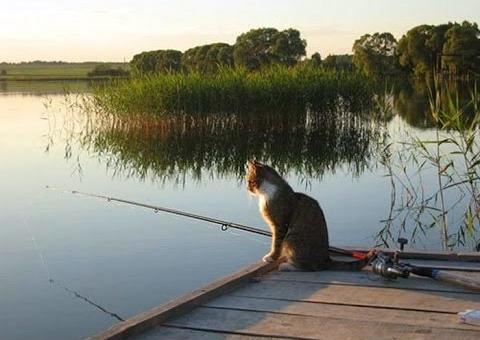 Кот Васька - рыболов!