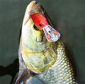 Некоторые бассовые крэнки раскрашены «под рака». Хотя хищники наших водоемов раками питаются реже, такие воблеры оказываются уловистыми и нас