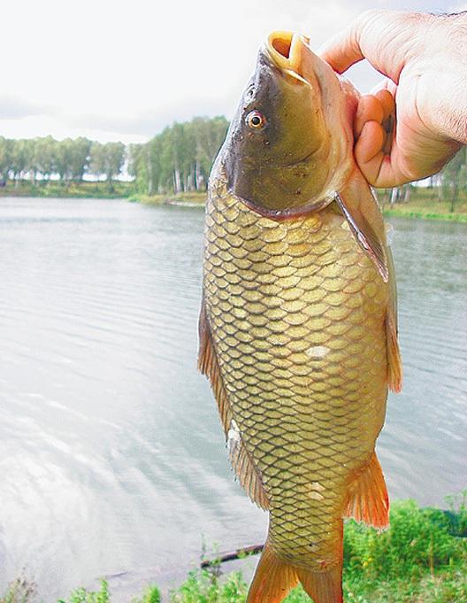 Рыбалка на Дону - ловля карпа.