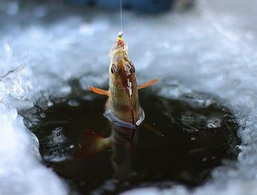 Первая зимняя рыбалка.