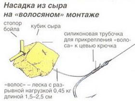 Насадка из сыра на волосянном монтаже