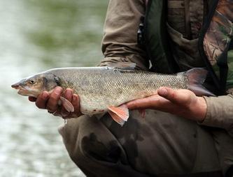 Рыбалка на Сахалине - виды рыб и их ловля.