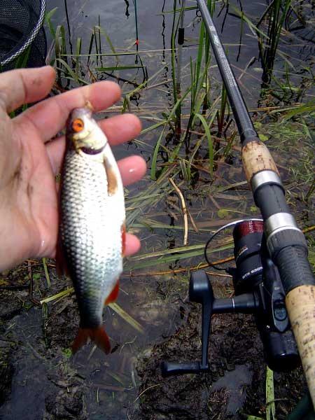 Ловля рыбы на дальних дистанциях.