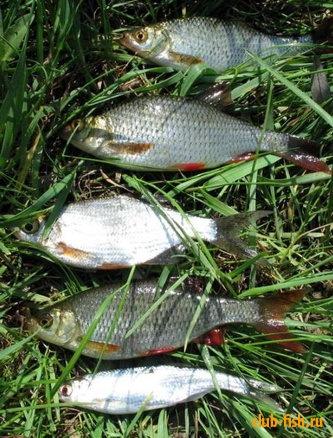 Рыбалка ловля окуня поздней осенью