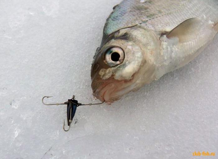 как ловится рыба при высоком давлении
