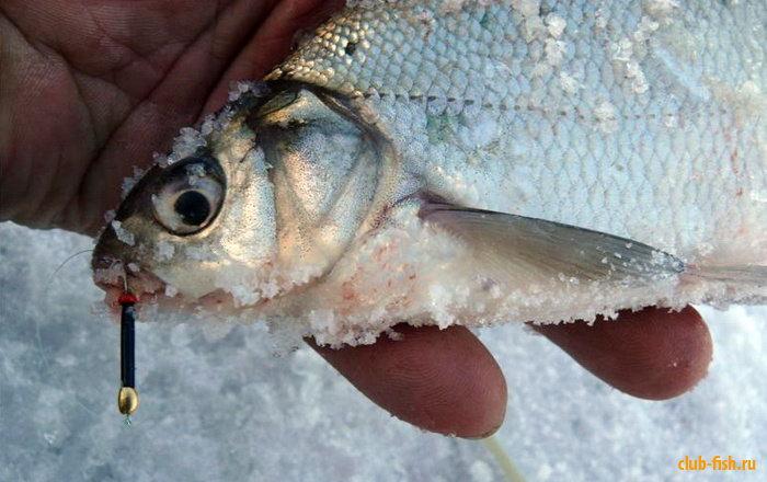 Поиск активной рыбы