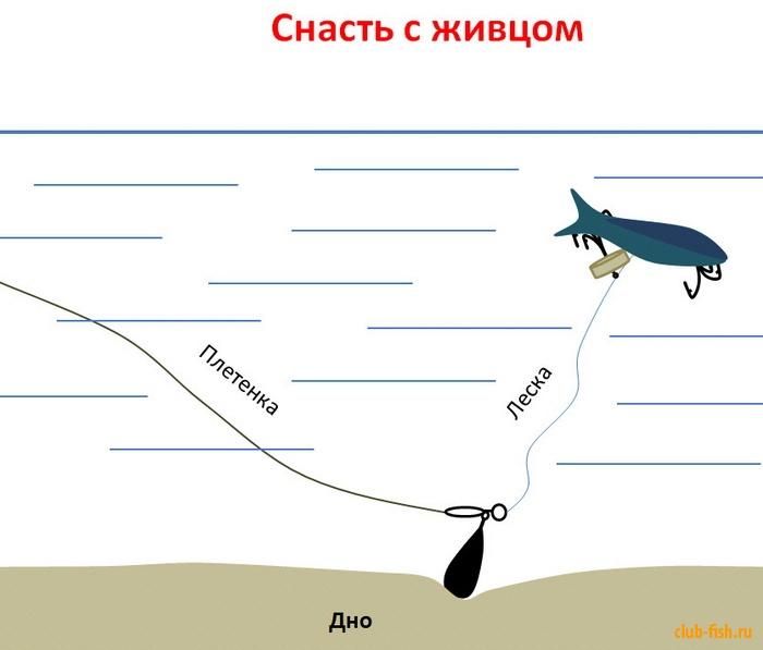 технопланктон как использовать