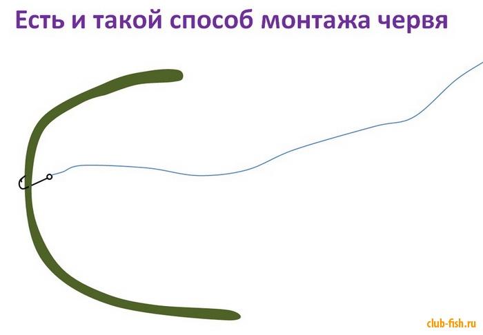 2809_club-fish.ru_5.jpg
