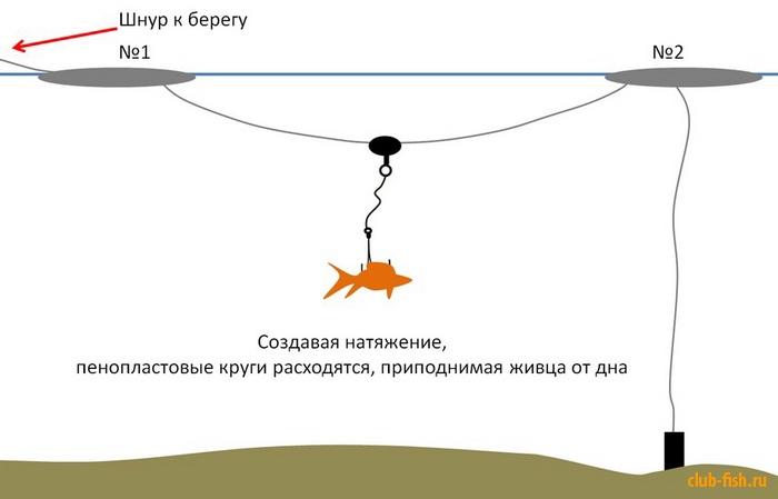 можно ли ловить сома на кружки