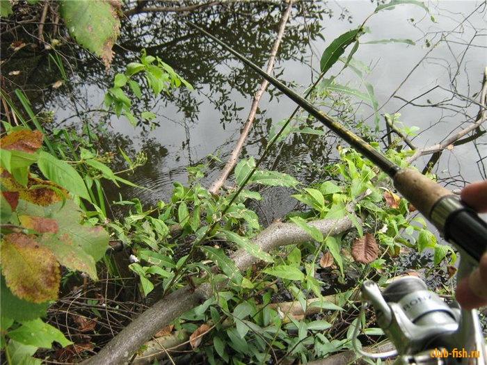 Рыба любит притопленные деревья и кусты
