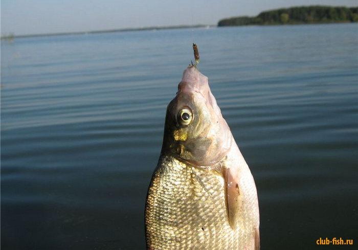 прикормка рыбы озере