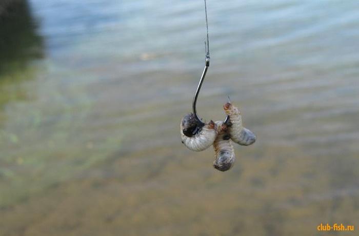 наживка для крупной рыбы 5 букв сканворд