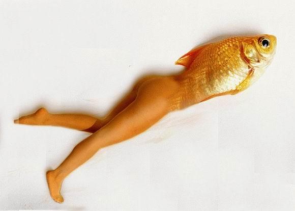 рыбы фотошоп