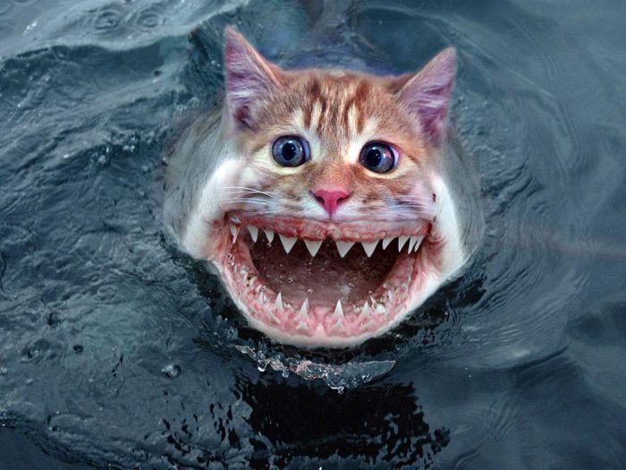 рыба кот