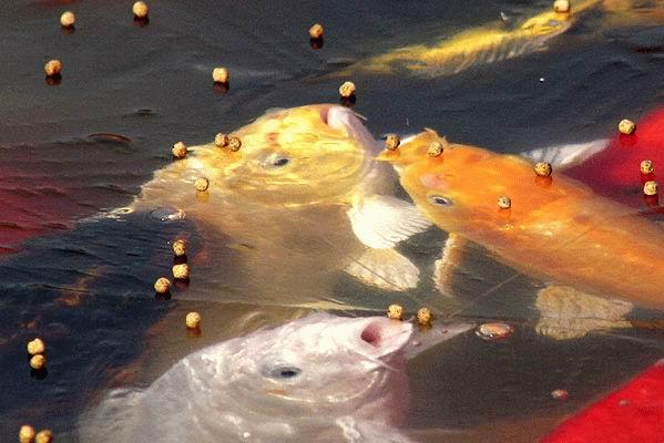 прикормка для ловли холодной воде