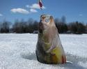 Основы зимней рыбалки.