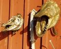 Сувениры из рыбацких трофеев - чучело рыбьей головы и раки