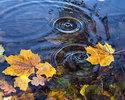 Как решить проблему с листьями на воде.