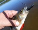 Вершина эволюции - Рыболовные приманки OSP Dolive Stick.