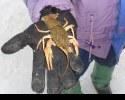 Рака на мормышку в январе!!!!!!!