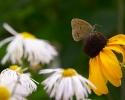 Летняя про бабочку :)