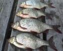 Как сделать блесну в домашних условиях для зимней рыбалки