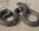 Практически кобра