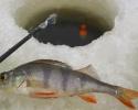 Первый раз на зимнюю рыбалку. Набор зимнего рыболова
