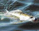 Оснащение охотника за судаком