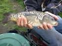 Что мешает рыбаку?