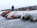 Зимняя блесна - видео программа онлайн.