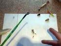 Зимняя снасть (оснастка) - Балда - видео.