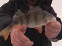 Моя рыбалка - Варваровское водохранилище.