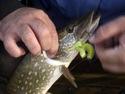 Рыбалка на лиманах Приазовья - видео.
