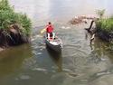 Летающий карп сам запрыгивает в лодку.