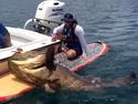 Огромный морской окунь с гребной доски.