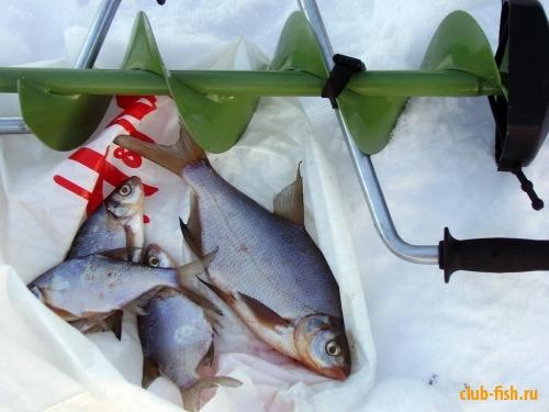 Натюрморт зимней рыбалки или улов дня