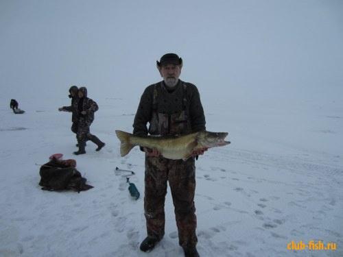 Судак на Рыбинском водохранилище