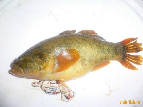 Неопознанная рыба