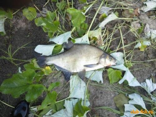 Наша рыбалка на реке Мокша (Мордовия)